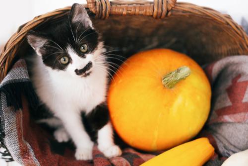 白黒柄の猫