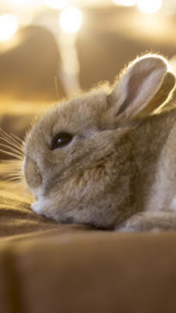 もふもふのウサギの画像