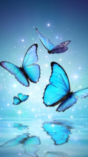 神秘的な蝶の画像