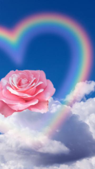 虹とピンクの薔薇の画像