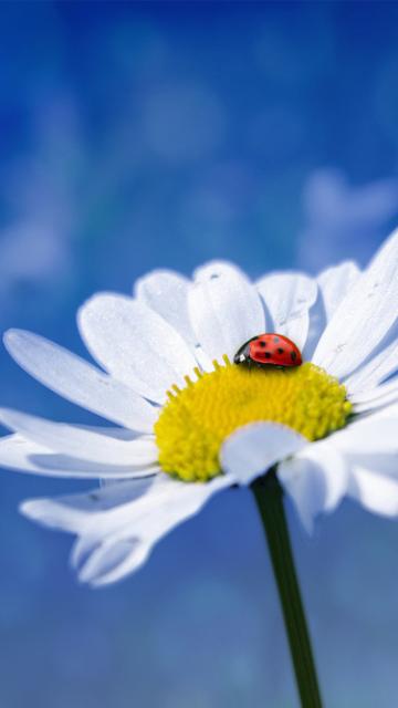 花にとまったてんとう虫の画像